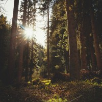 Morning Flare in The Forest